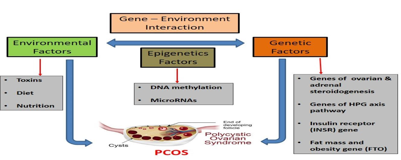 """""""General Overview of Polycystic Ovary Syndrome (PCOS)."""""""